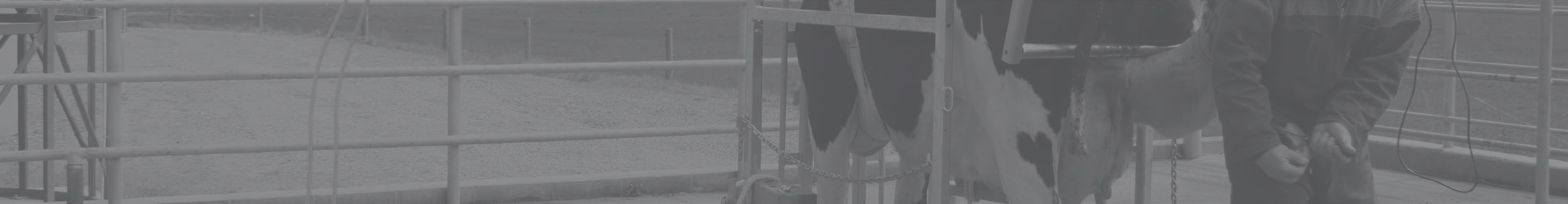 veehof-dairy-services-footer-slider-contact-trimming