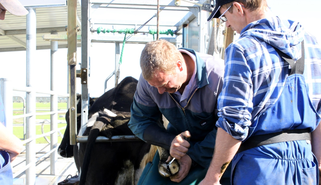 veehof-dairy-services-gallery-20