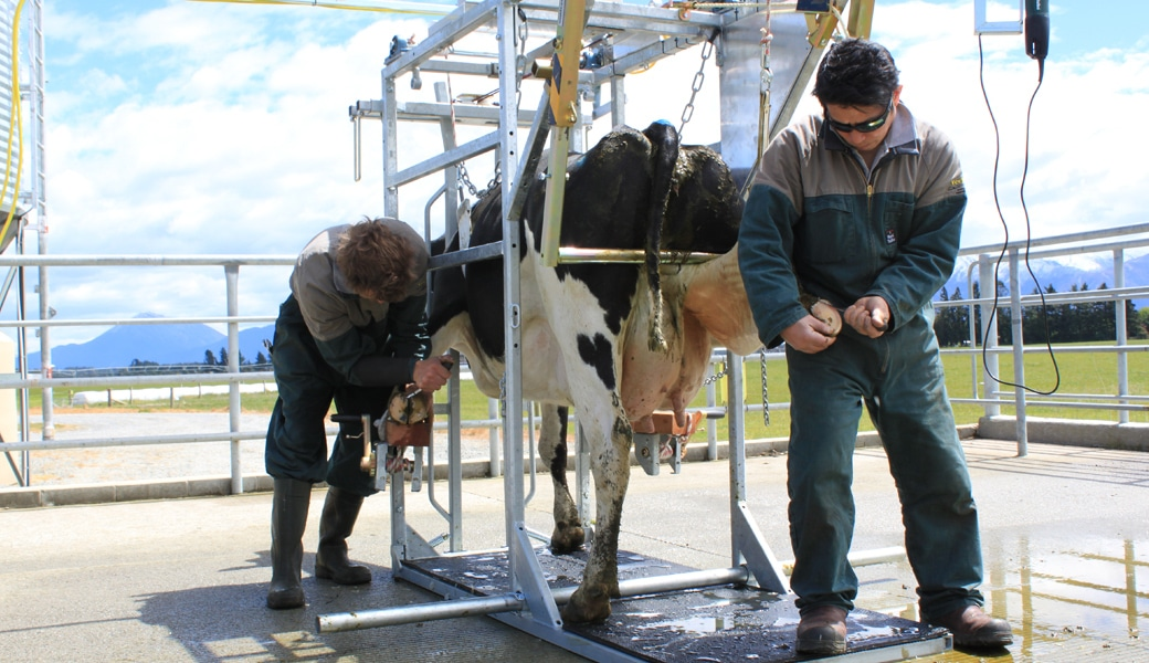 veehof-dairy-services-gallery-30