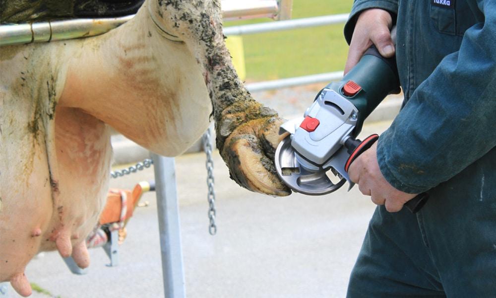veehof-hoof-care-tools-slider-1